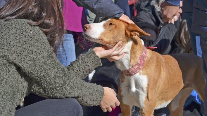 Más de 50 perros de Son Reus desfilarán para buscar familia definitiva