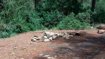 Denuncian carreras de quads por el bosque y zonas verdes de Son Verí