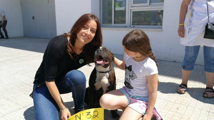Una docena de perros encuentran familia adoptiva en Son Moix