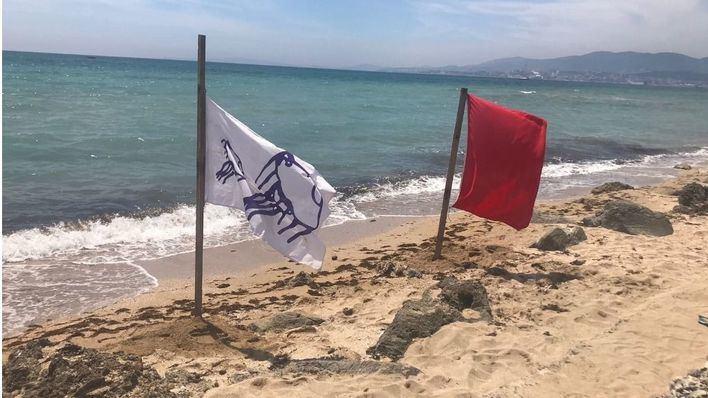 Cierran las playas del Molinar y Can Pastilla por la carabela portuguesa