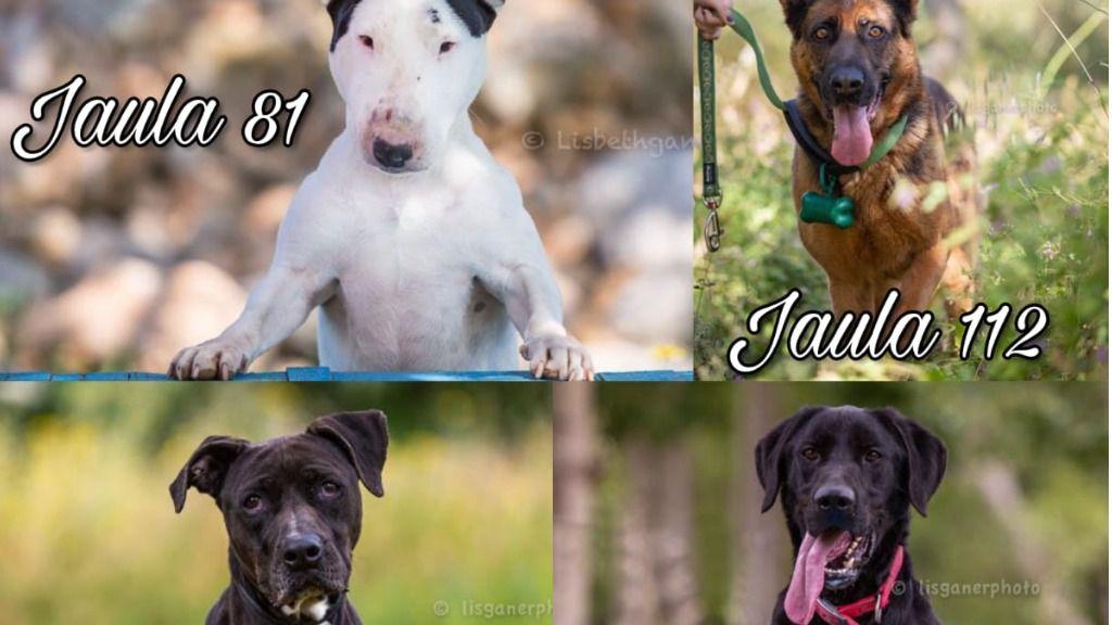 SOS desesperado desde Son Reus: 16 perros en lista de sacrificio