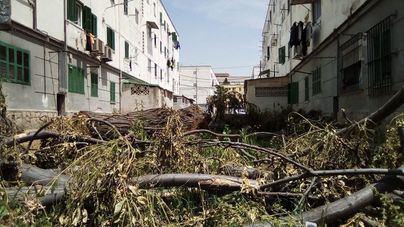 Árboles talados hace un mes se acumulan en las calles de Camp Redó