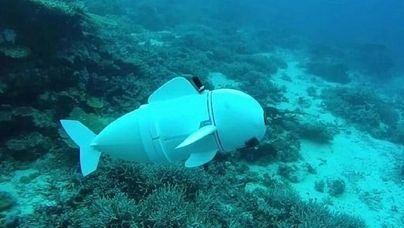 Cómo la tecnología impacta positivamente en la investigación marina