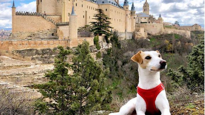 Pipper, 'primer perro turista e influencer del mundo'