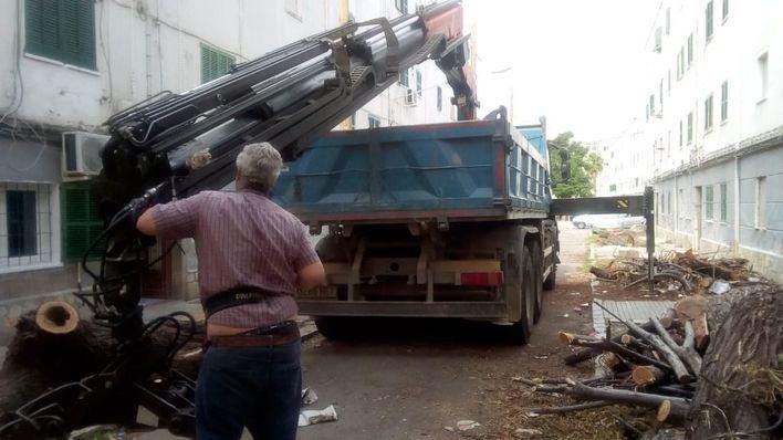 Cort retira los restos de árboles talados en Camp Redó acumulados desde hace más de un mes