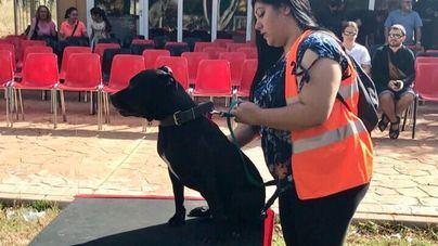 25 Perros en riesgo de sacrificio desfilan este sábado en Son Reus