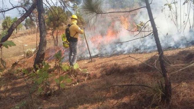 29 conatos de incendios forestales en Balears quemaron 4,07 hectáreas en lo que va de año