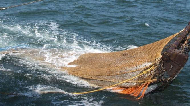 La ONU alerta que el Mediterráneo es el mar con más sobrepesca del mundo