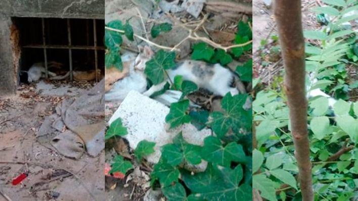 Preocupación vecinal por la ola de envenenamientos de gatos en s'Arenal