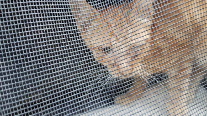 Más gatos envenenados y maltratados en s'Arenal
