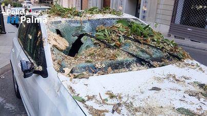 Un conductor sufre heridas leves tras caer una rama sobre su coche en la calle Conquistador de Palma