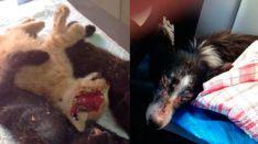 Más maltrato animal en Mallorca: gatos muertos a golpes y un abandono grave que prescribe