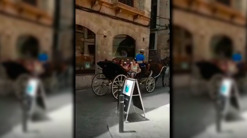 Más excesos de galeras en Palma: un caballo tirando de ocho personas