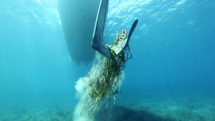 Encuentran posidonia muerta en 19 de las 43 calas del litoral de Ibiza