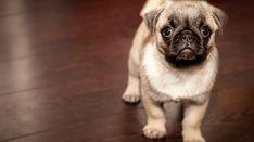 Guía para convivir responsablemente con un perro