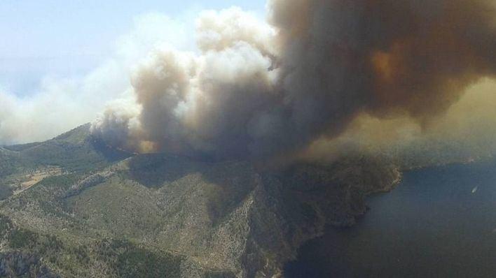 El 60 por ciento de la zona quemada en el incendio de Andratx ya está repoblada