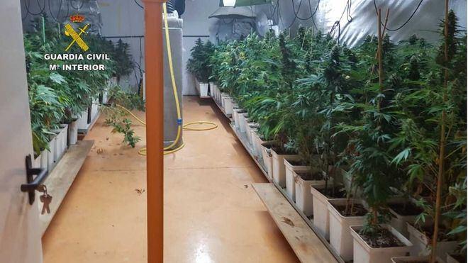 Desmantelan una plantación de marihuana en el polígono de Son Noguera en Llucmajor