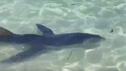 Evacúan la playa de Calas de Mallorca tras el avistamiento de un tiburón de casi tres metros