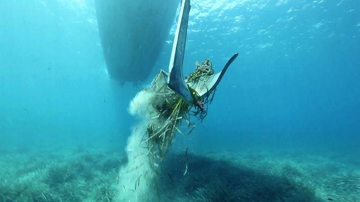 Casi siete de cada diez lectores creen que el decreto de la Posidonia no protegerá el fondo marino