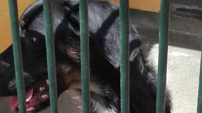 Son Reus saturado: 98 perros y 34 gatos esperan adopción
