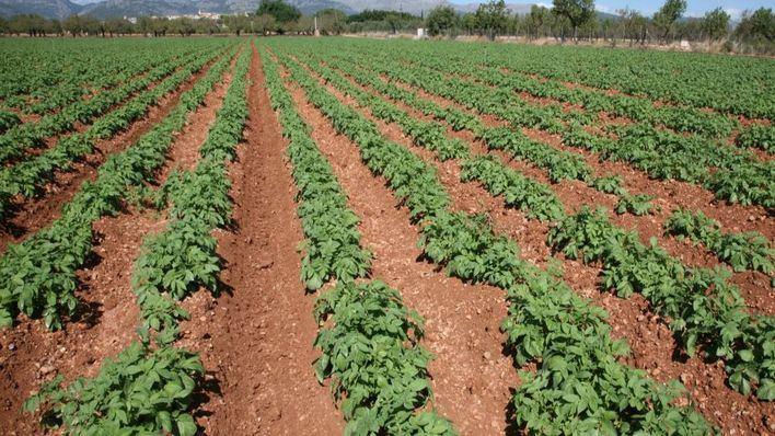 Diferentes organizaciones agrarias piden la