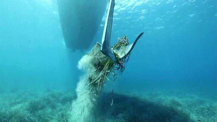 Formentera registra un descenso de los fondeos sobre posidonia