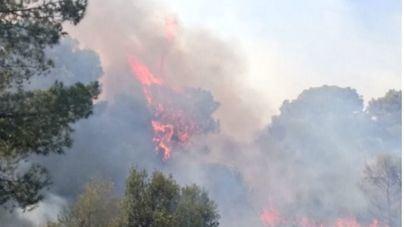 Controlado el incendio de Cala Magraner tras quemar más de 13 hectáreas de pinar
