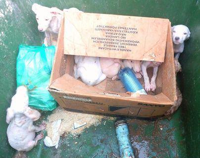 Rescatan a 9 perritos abandonados en un contenedor en Inca