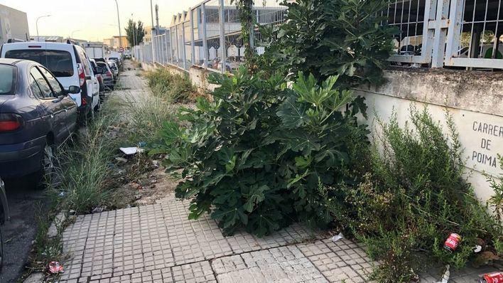 ASIMA pone en marcha la segunda campaña de limpieza de malas hierbas