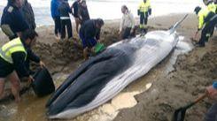 Tres de cada cien muertes de cetáceos se deben al plástico