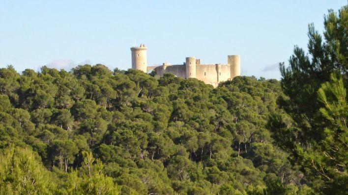 La Afapam organiza una carrera solidaria en el bosque del Castillo de Bellver
