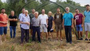 El IRFAP recupera 22 variedades antiguas de cereales de Balears
