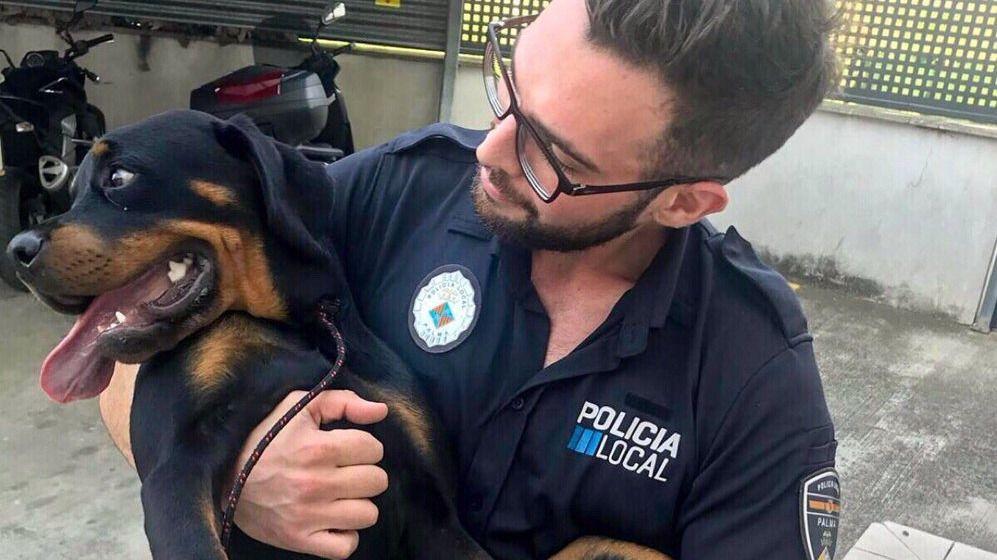 Buscan al dueño de un perro extraviado en s'Arenal de Palma