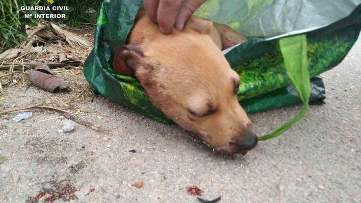 Detenido un joven de 20 años por maltratar a un perro y tirarlo a un contenedor de Palma