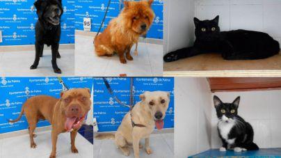 Llamamiento urgente de Son Reus: 150 perros y gatos necesitan adopción