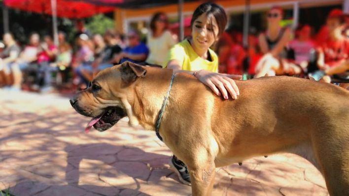30 perros en riesgo de sacrificio buscan familia en el VII desfile de Son Reus