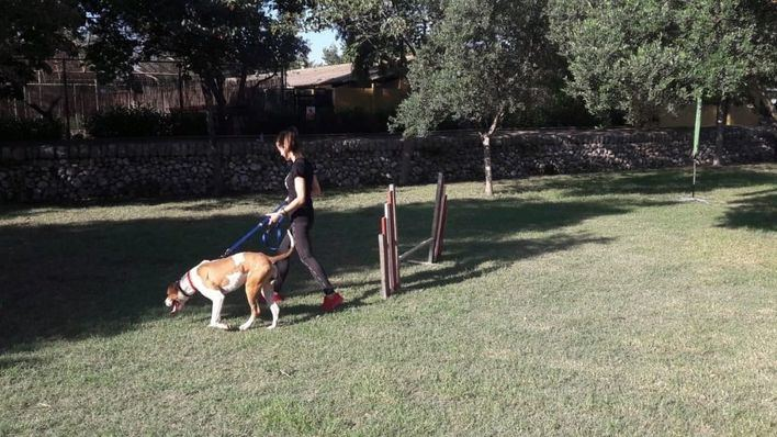II carrera solidaria para fomentar la adopción de perros en Port Adriano