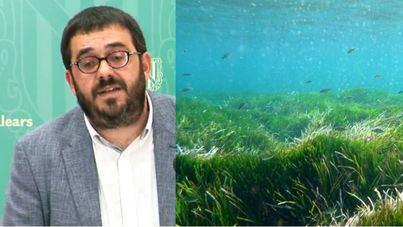 El Govern aprobó el Decreto de Posidonia sin estudios del IMEDEA ni del Ministerio