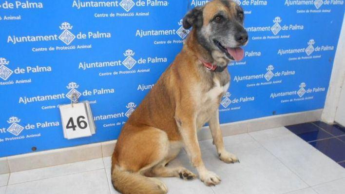 Palma celebra el Día de los animales recordando a los abandonados