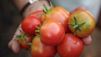 Incluyen el tomate de 'ramellet' en el Catálogo de Alimentos Tradicionales