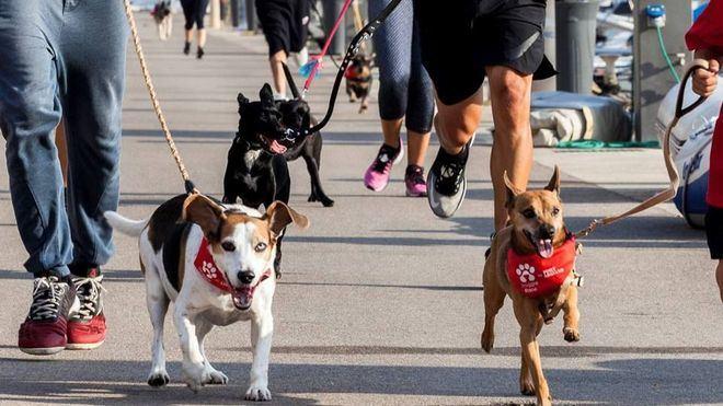 Port Adriano organiza este sábado la carrera solidaria Doggie Race