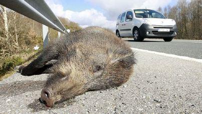 Balears ha registrado 569 accidentes de tráfico con animales implicados desde 2012