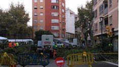 Poda de urgencia en Pere Garau tras desplomarse un árbol sobre dos ancianos