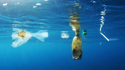 Calvià y la Fundación Palma Aquarium organizan un día de concienciación y limpieza en El Toro