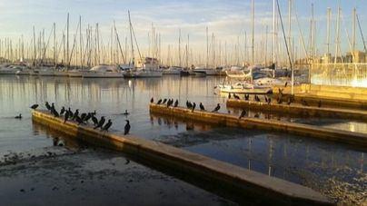 La Autoridad Portuaria bonifica a 6 empresas con 264.826 euros por buenas prácticas medioambientales
