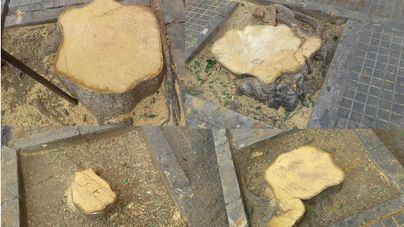 Cort pasa de la poda a la tala y arrambla con los árboles de la zona de Pere Garau