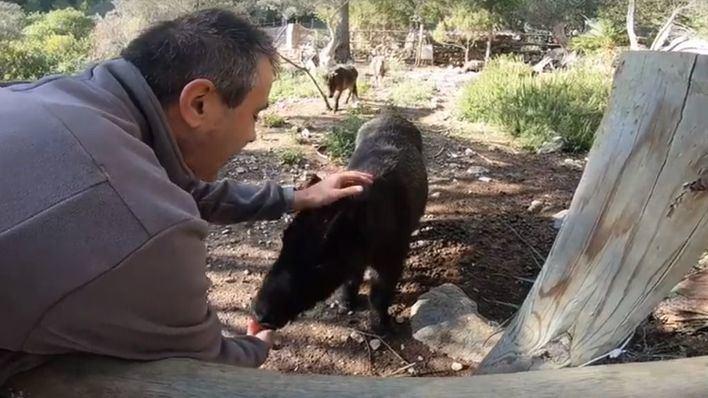 Alarma en redes sociales por la manada de perros que ha matado a dos ponis en Puigpunyent