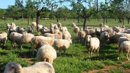 El Fogaiba paga casi 3,6 millones de euros en ayudas a campesinos, ganaderos y jóvenes payeses