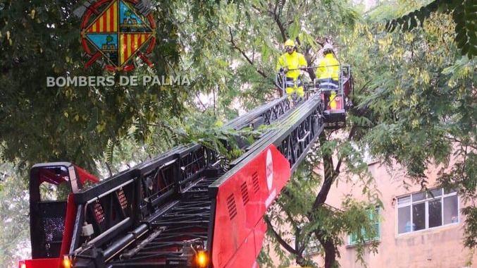 Avisos de desprendimientos en Palma y la Serra de Tramuntana con desborde del torrente de Sa Canova