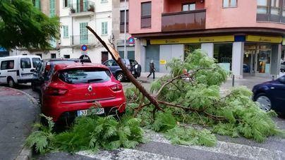 Los fuertes vientos y lluvia dejan 87 incidentes en todas las islas